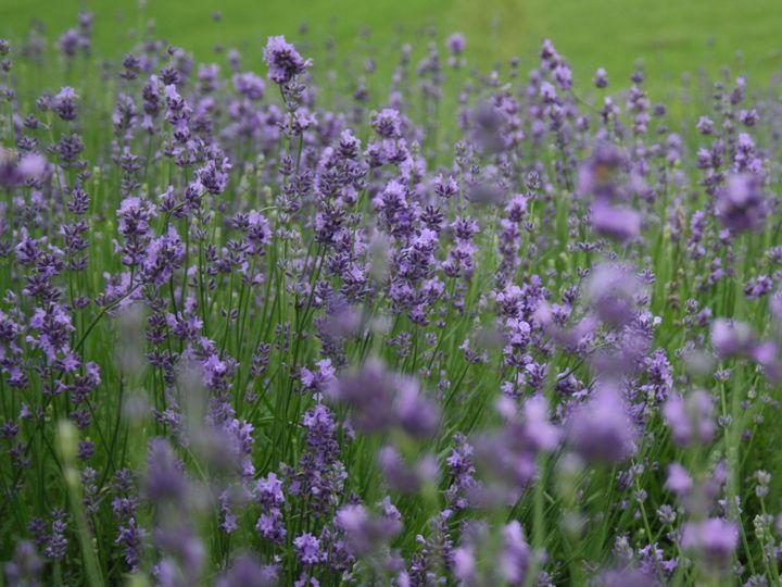 Tmx 1466530722743 Img6921 Use Ff Fly Creek, NY wedding florist
