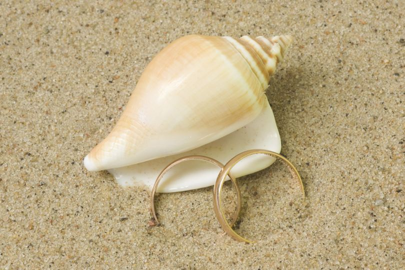 Shell and Weddingring