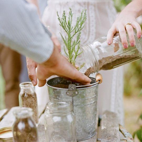 Planting tree ceremony
