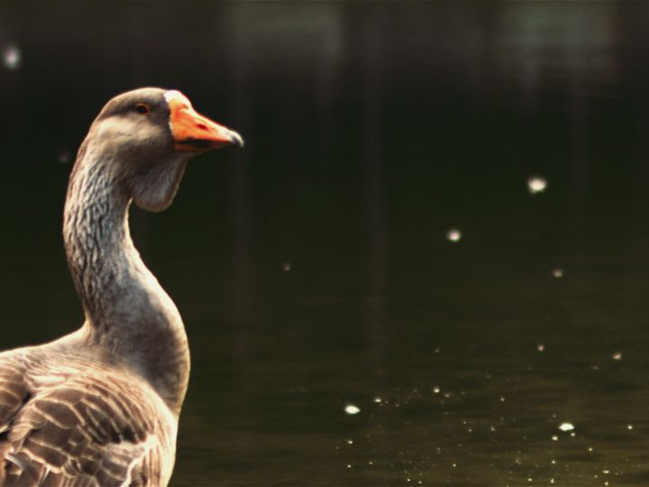 Tmx 1508671673393 Duck At The Pond High Point, NC wedding videography