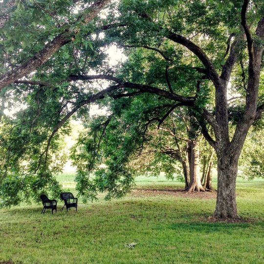 Beautiful mature trees