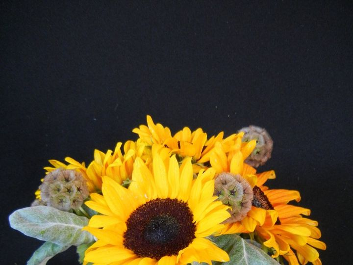 Tmx 1348676113865 Weddings122 Franklin wedding florist