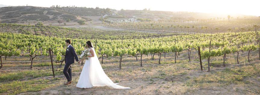 Views of the vineyard