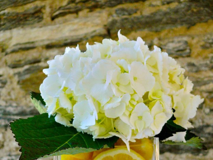 Tmx 1360536293646 Pagello8 White Plains wedding planner
