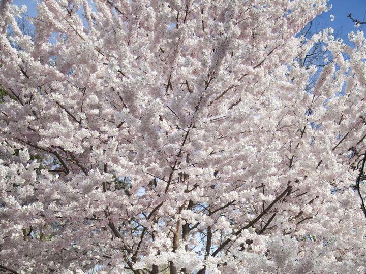 Tmx Springtime In Central Park 51 418738 New York, NY wedding officiant