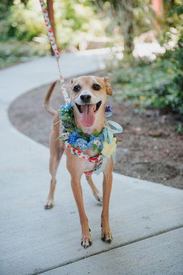 Dog flower collar