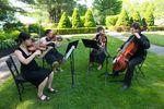 Angela Yantorno Violin image