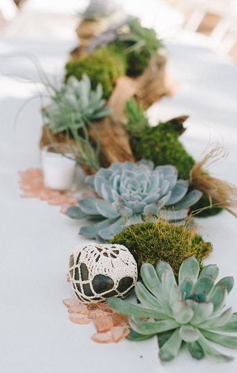 Succulent and driftwood table runner.  Photo by Nathan Russell Photo.