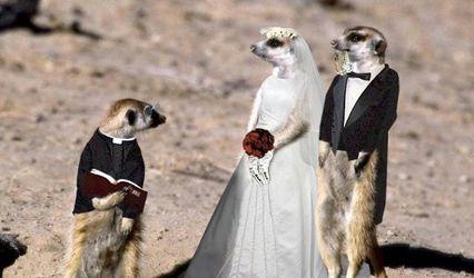 Always Keep Austin Weddings Weird Ministries 1
