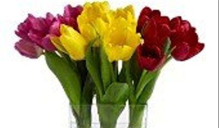 Bayside Florist 1