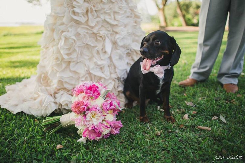 Bridal bouquet and wedding pet