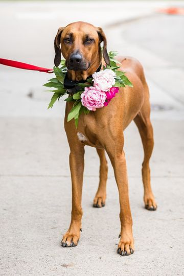 Flowers for the dog