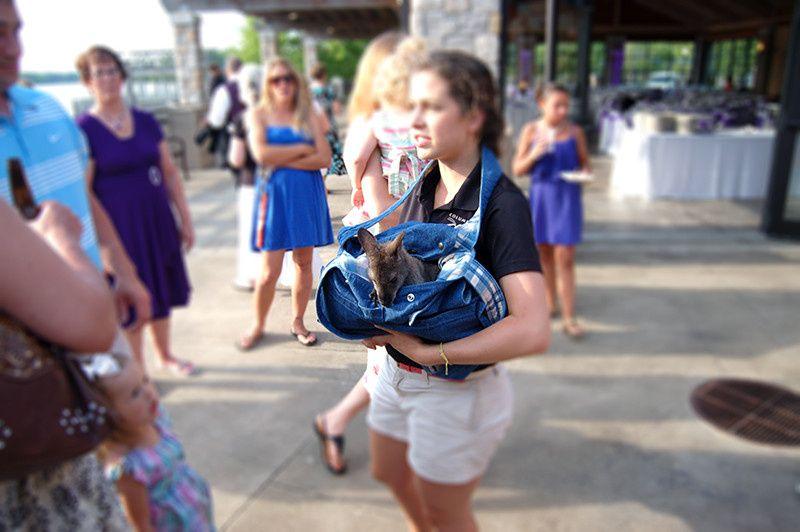 columbus zoo wedding060714dr