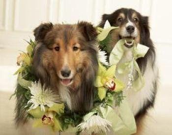 Tmx 1298487575081 5thave17 Columbus, Ohio wedding florist