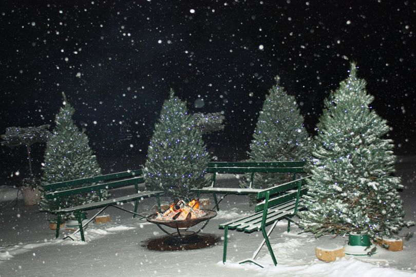 patio christmas trees