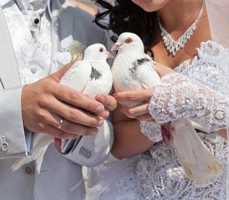 Tmx 1463342976988 14618696s Saint Clair Shores, MI wedding planner