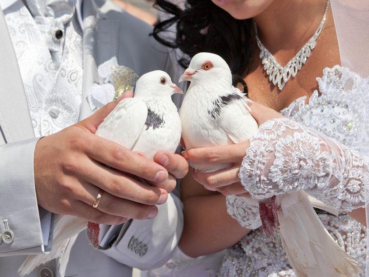 Tmx 1486599974637 Birds Temecula, CA wedding planner