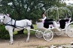 Fantasia Carriage image