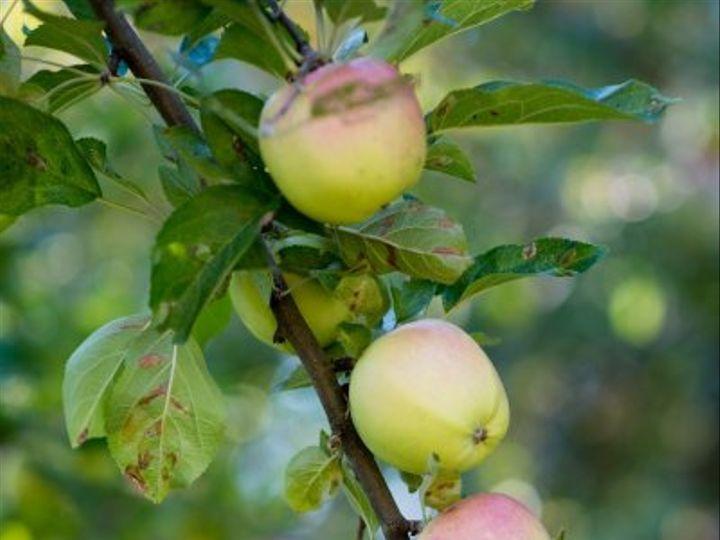 Tmx Lcc Apple Tree 51 634468 Waldoboro, ME wedding catering