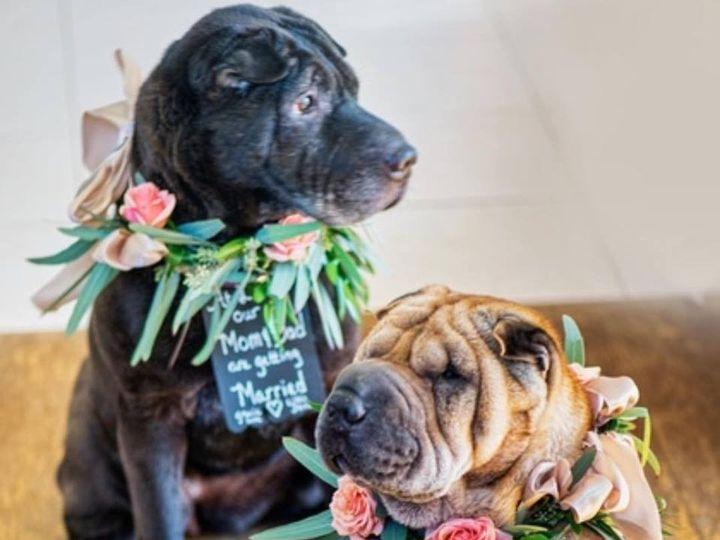 Tmx 1464808472345 127173589695453730814485023001386464356205n Wallingford, Connecticut wedding florist