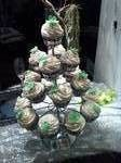 Tmx 1370489586203 Wedding Cupcakes Penngrove wedding cake