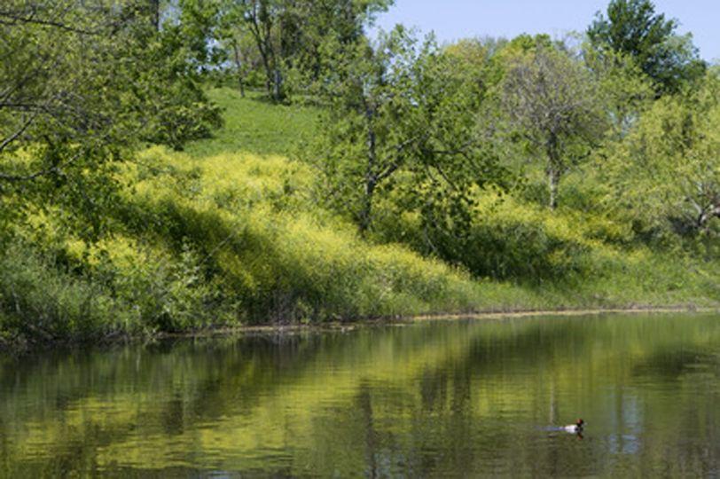 Barn pond