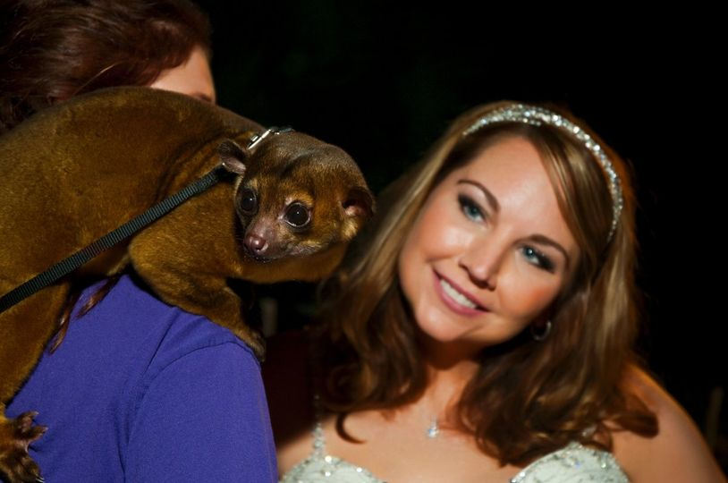 Bride poses with animal