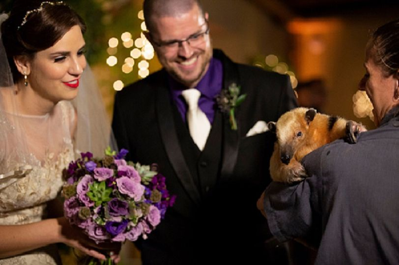 Animal Mingle with Newlyweds