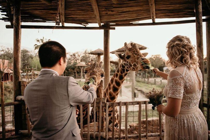 Newlyweds feed new friends