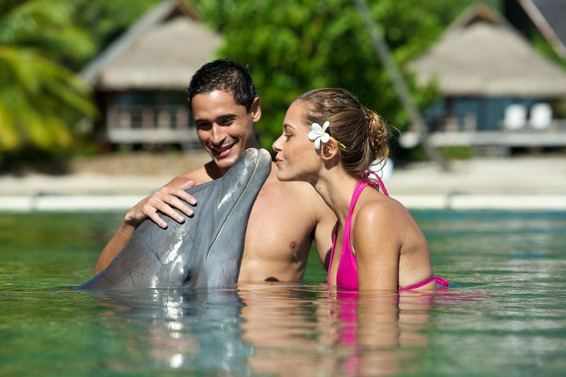 Meeting the dolphins of the Moorea Dolphin Center at the InterContinental Moorea Resort and Spa |...