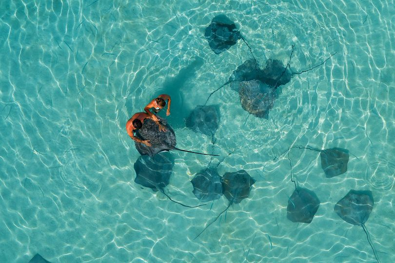 Meet the friendly rays of Moorea Island | Honeymoons by Tahiti.com