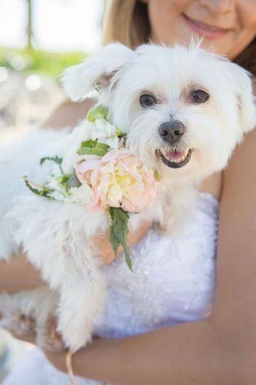 Flowers for our furry kids too!