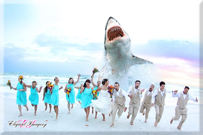 shark 01c 4x6 bevel