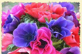 California Organic Flowers
