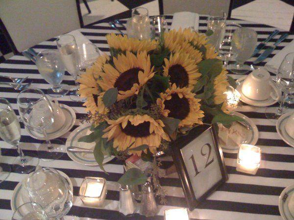 sunflowerpalooza004