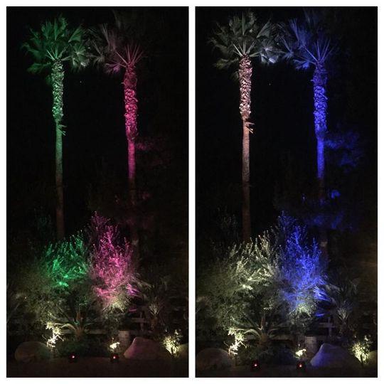 Palm Tree Uplights