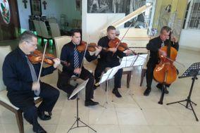 Violines Kamayd