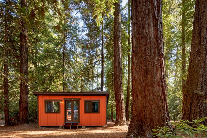 Cabin and Redwoods
