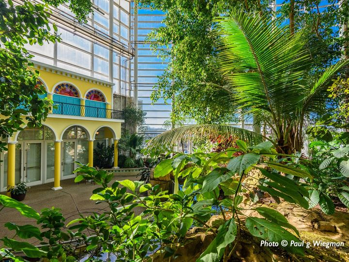 Tmx Tropical Forest Credit Paul G3 51 74588 157712915631171 Pittsburgh, PA wedding venue