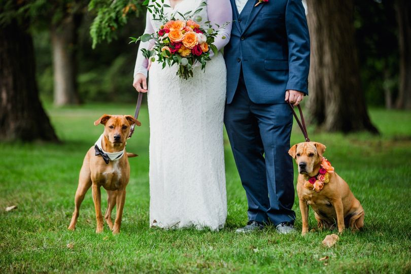 Wedding pups
