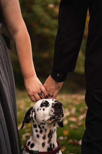 Bride. Groom and Dog