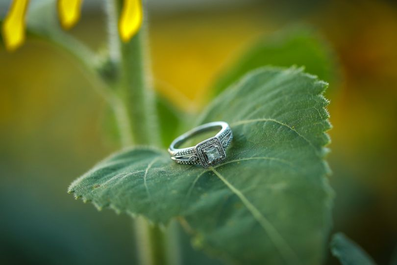 Ring from Shoot!
