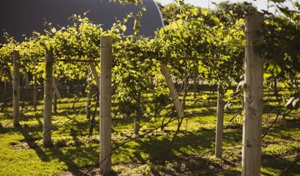 Backcountry Winery