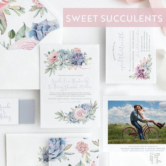 Sweet succulents suite