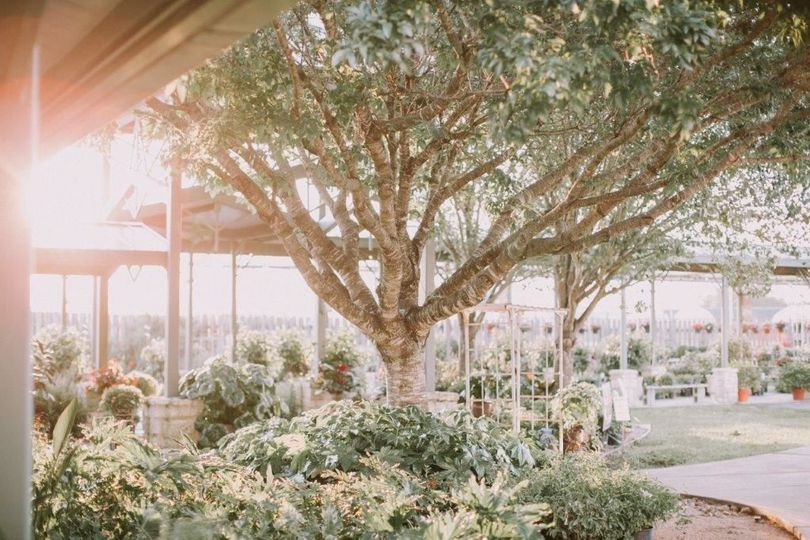 Greenhouse ara