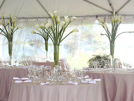 Tmx 1415305133786 119310523140a1aac4829 Bayonne wedding planner
