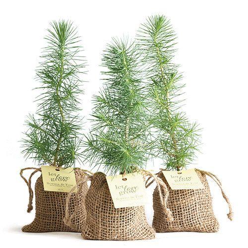 pinefavor 804570 03rgb