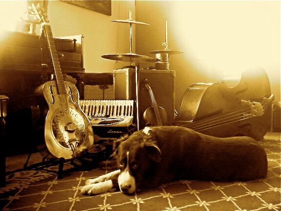 Dog by the instruments