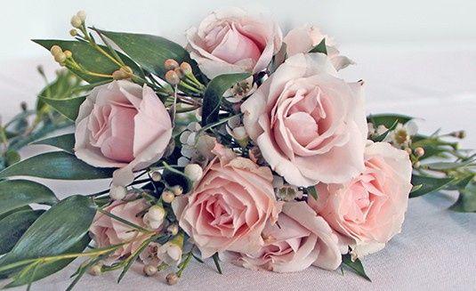 ohara 19 pink rose closeup web ww copy 51 1862309 1573505107