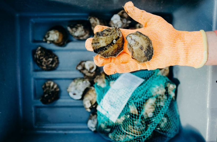 Bag of fresh oysters